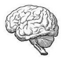 brain_2988dfa78fd5f759ed7