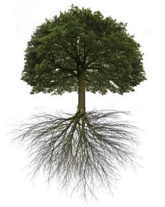 5-Amazing-Trees